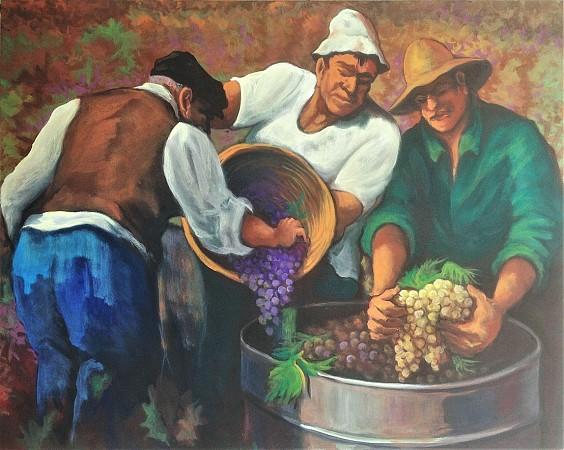 Grape Harvest 1967'