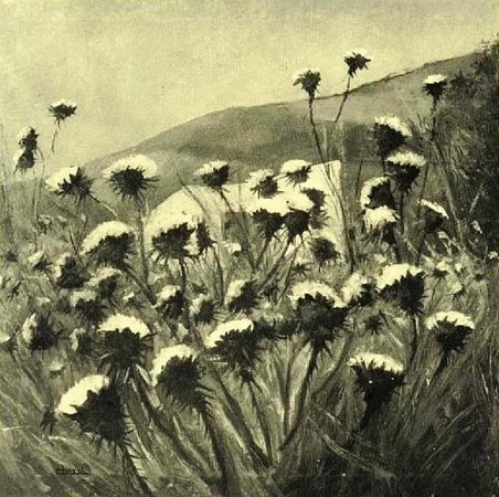 The Thistles